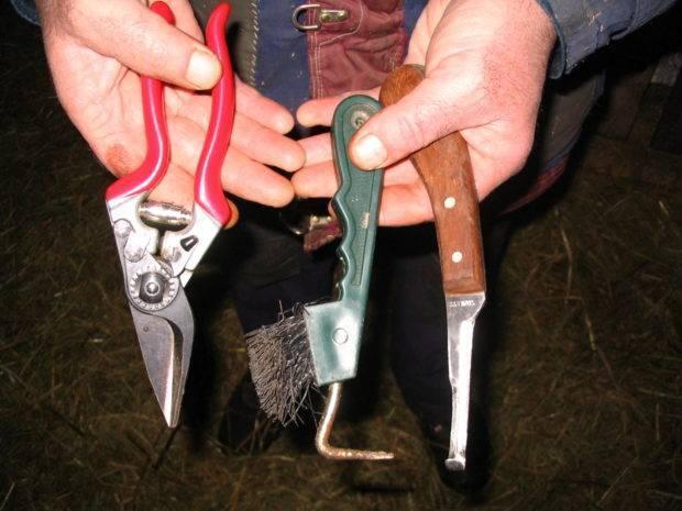 Как правильно проводить обрезку копыт у фермерских коз