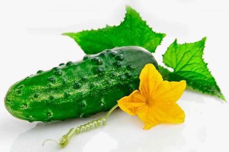 Калорийность огурца: сколько калорий в свежем овоще на 100 грамм, чем полезен и какие витамины есть составе