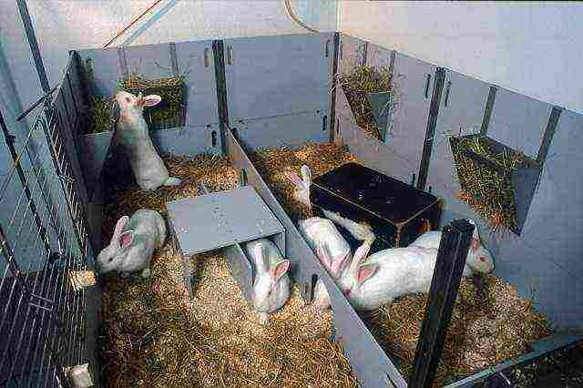 Как откормить кролика на мясо за короткое время?