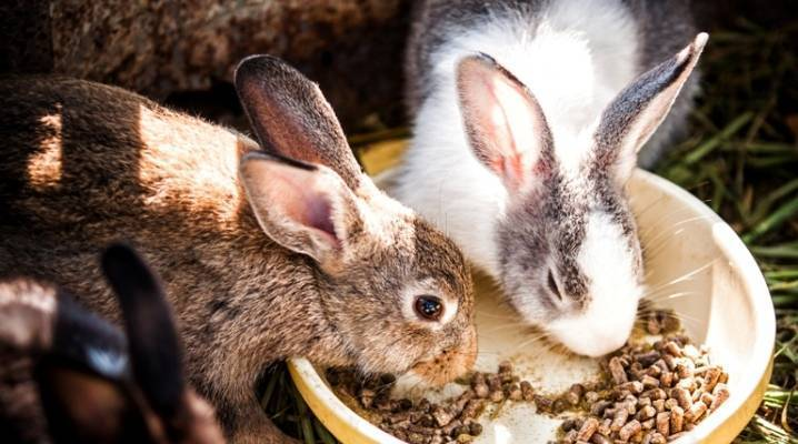 Сколько должен съедать кролик в сутки?