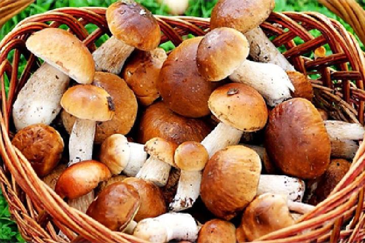 Какие витамины есть в грибах