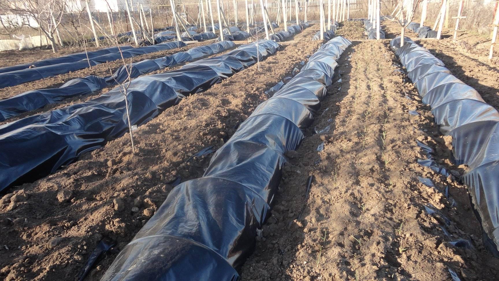 Укрывные материалы для винограда