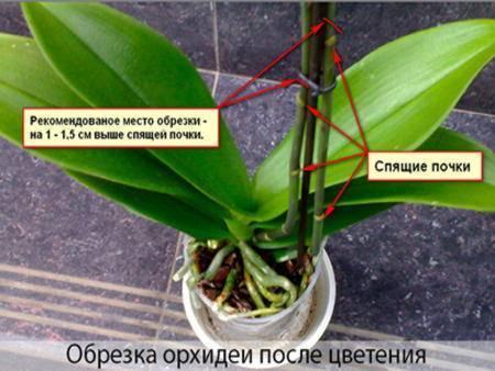 Орхидея выпустила цветонос - как ухаживать за ней и что делать, если она замерла?