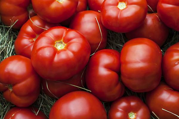 Томат вернер: характеристика и описание сорта, отзывы садоводов с фото