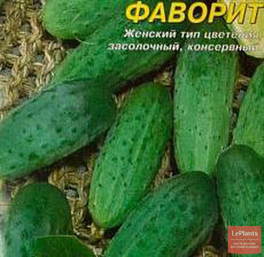 Огурцы для засолки и консервирования: название и описание лучших сортов засолочных огурцов, отзывы