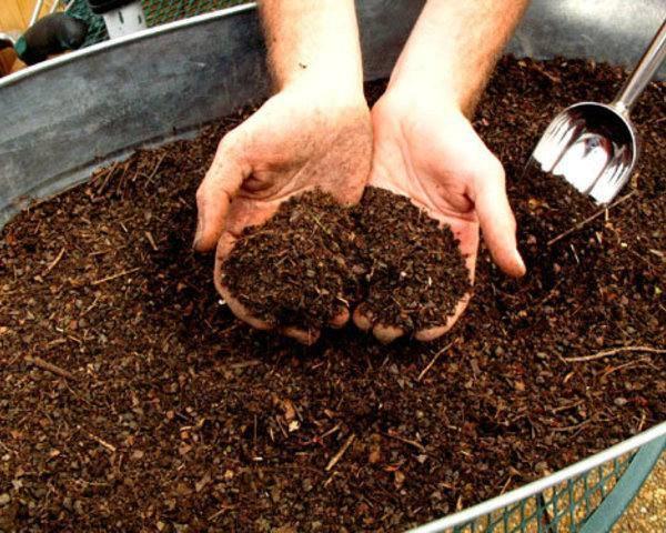 Удобрение огорода перепелиным пометом: все секреты
