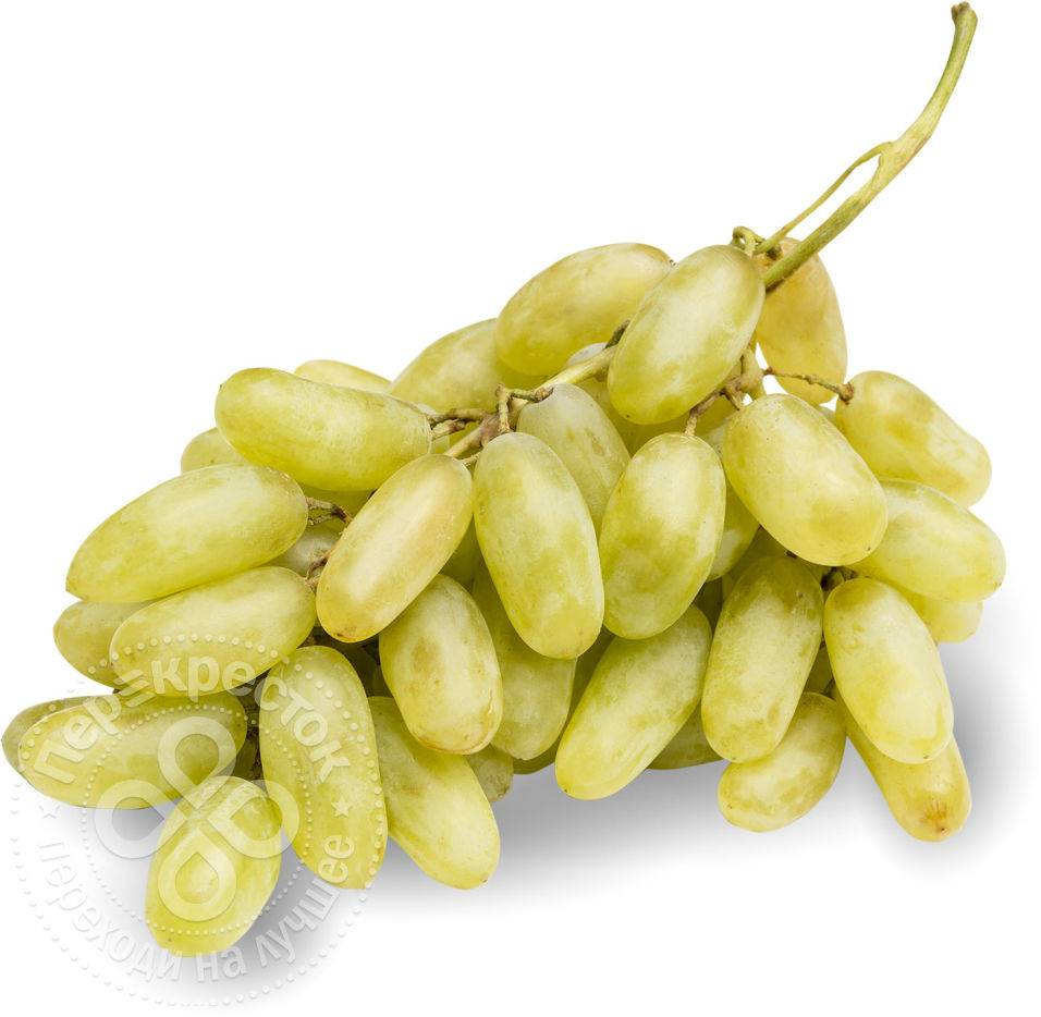 Старый проверенный виноград дамский пальчик