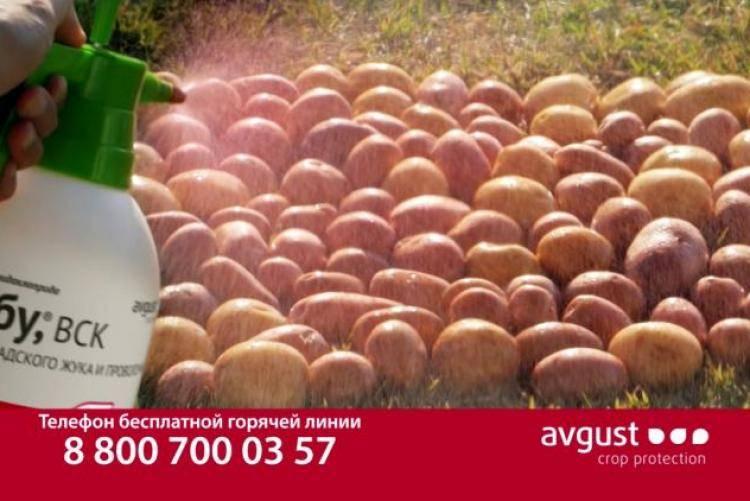 ᐉ престижитатор для картофеля: инструкция и дозировка средства - roza-zanoza.ru