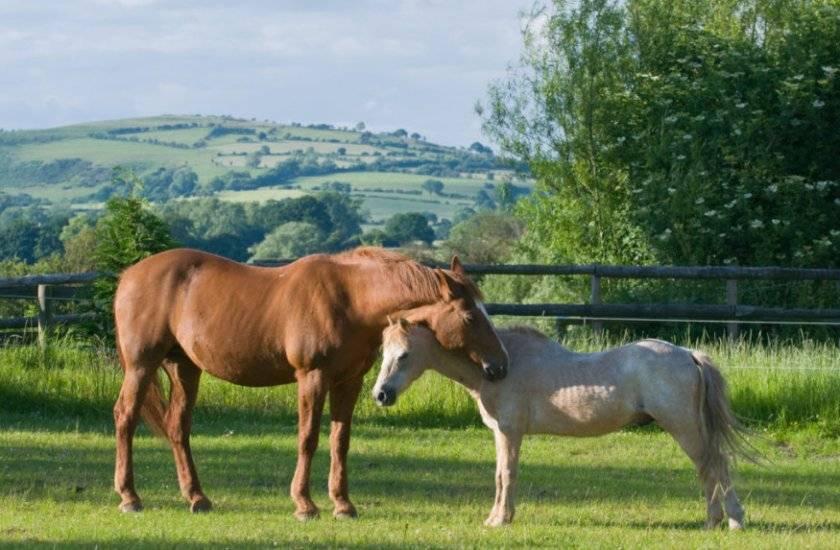 Лошадь спит: особенности и длительность, положение стоя и лежа на боку, признаки спящего животного и причины