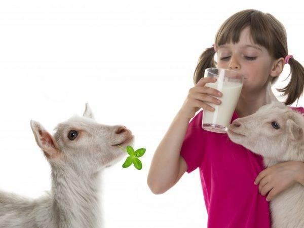 Как раздоить козу? инструкция раздаивания козы после первого окота. как раздоить козу, чтобы она давала 4 литра молока?
