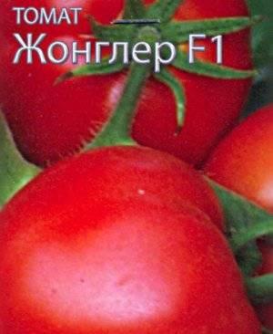 Томат жонглер f1: характеристика и описание сорта