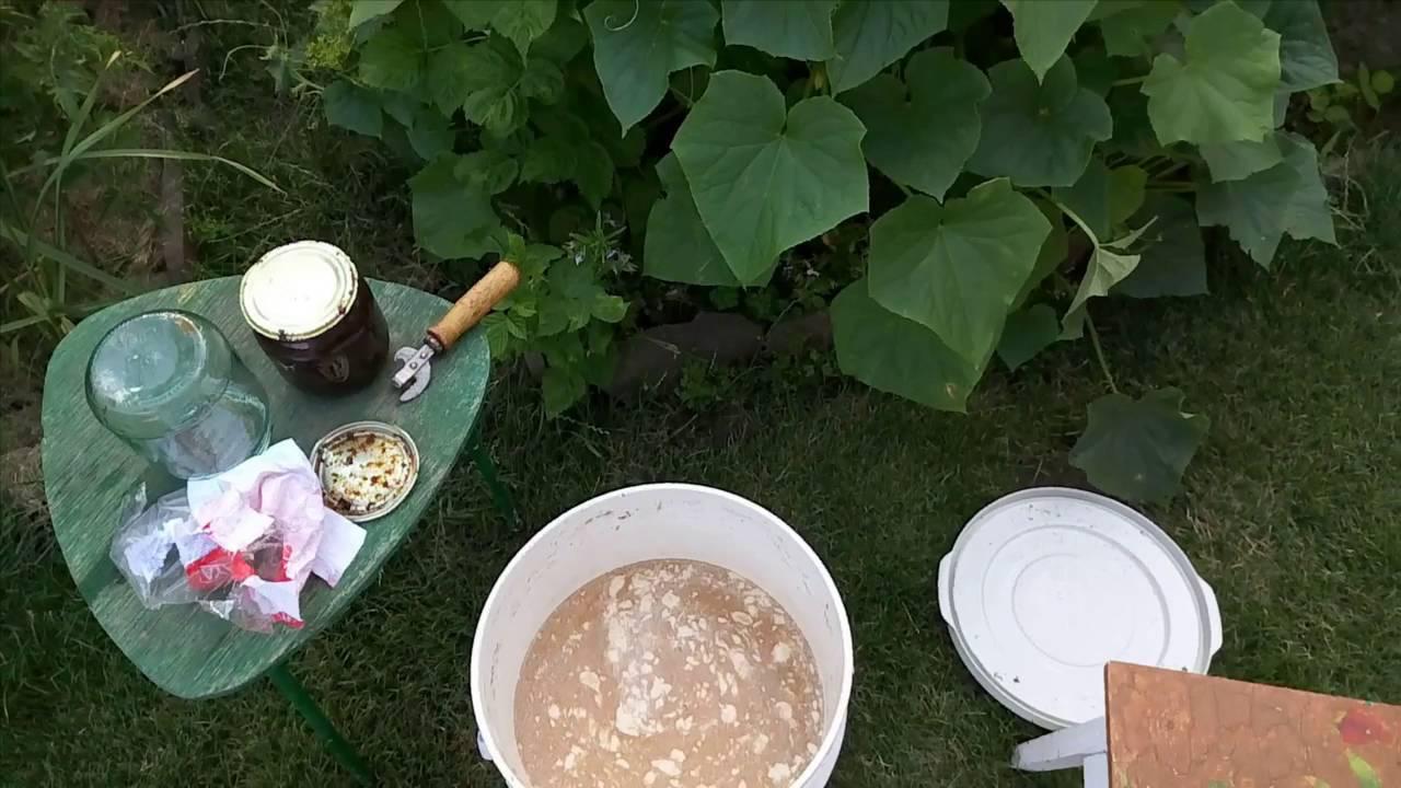 Подкормка цветов дрожжами: как правильно приготовить дрожжевые удобрения для растений и как их можно подкормить? рецепты приготовления удобрений для комнатных цветов