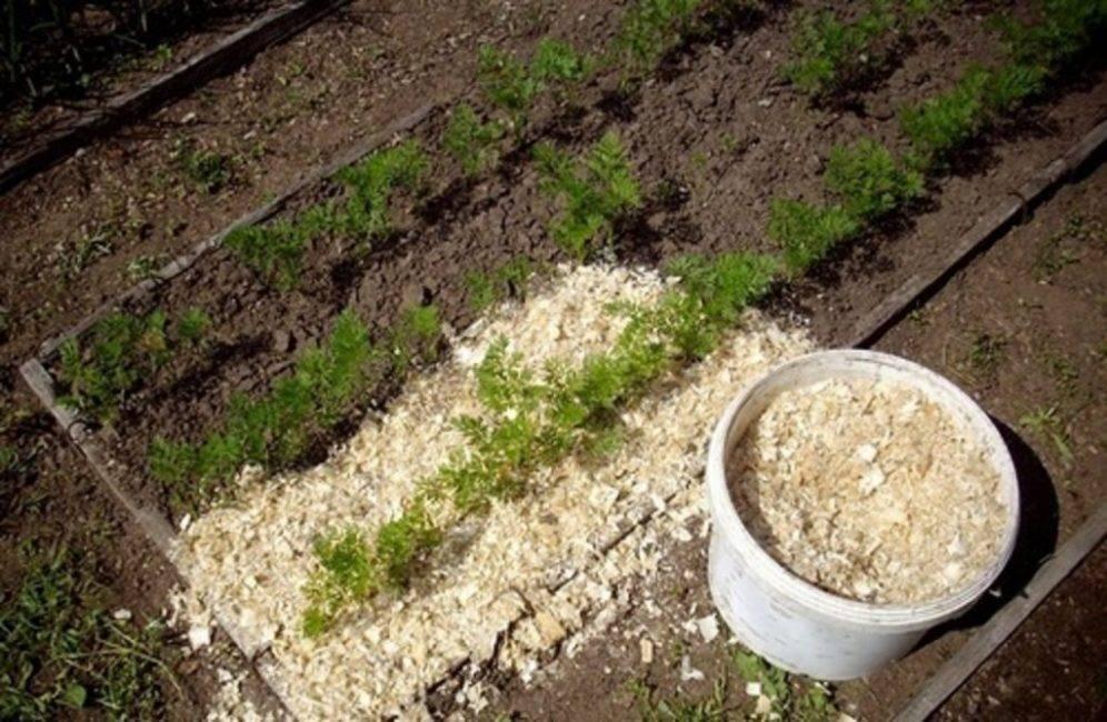 Мульчирование почвы - что это такое, плюсы и минусы