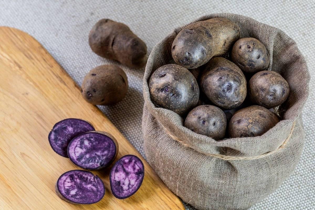 Фиолетовый картофель: полезные свойства