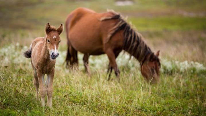 Цикл жизни лошадей: сколько живут?   конный портал