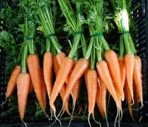 Морковь интересные факты