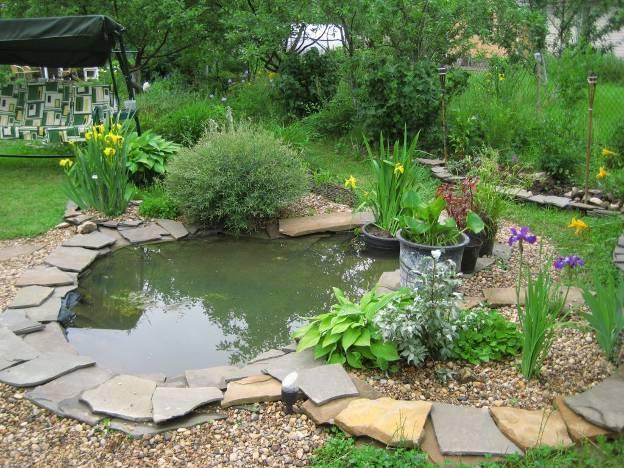 Какие растения лучше всего подходят для пруда на даче: названия с фото