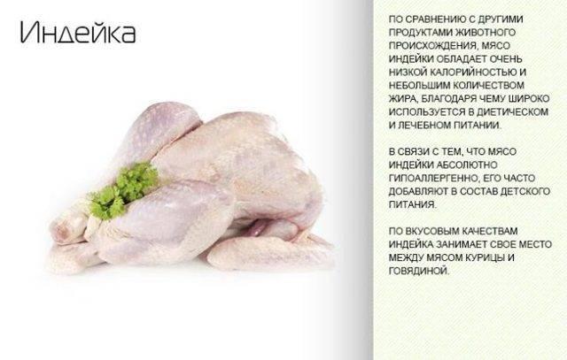 Мясо индейки: польза и вред, калорийность, рецепты диетических блюд