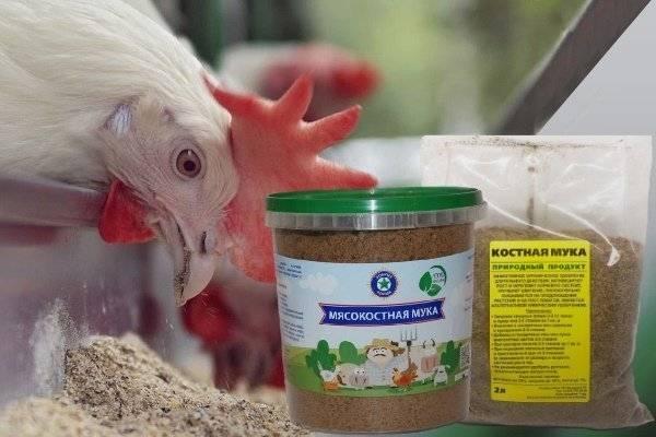 Как рассчитать дозу костной и мясокостной муки для кур