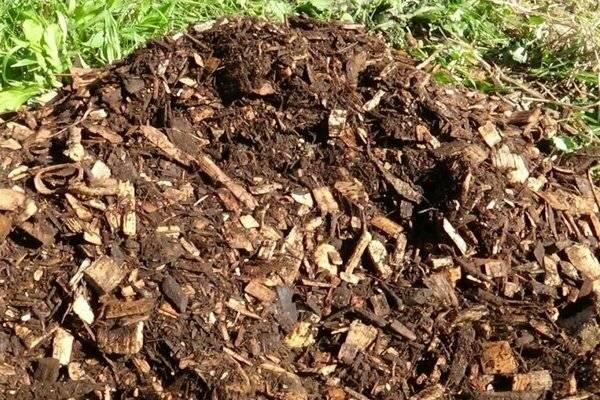 10 способов как использовать опилки для огорода весной и осенью