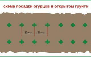 На каком расстоянии сажать огурцы: 100 фото схем посадок и видео описание правил размещения огурцов на грядке