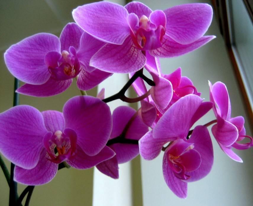 Почему орхидея осталась без корней? реанимация и уход за растением