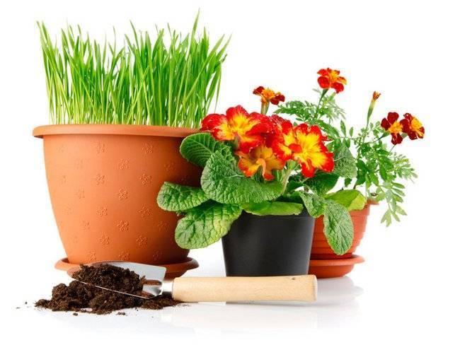 Пересадка комнатных растений — главные правила
