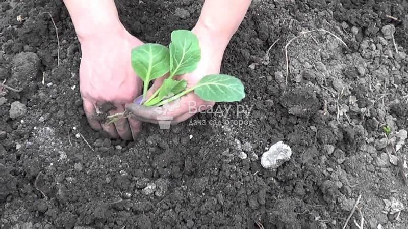 Посадка семян в улитку: советует юлия миняева