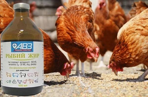 Как давать рыбий жир курам и цыплятам