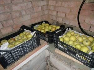 Где и как можно сохранить яблоки на зиму?