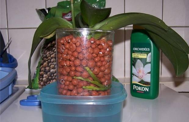Чудесный субстрат для выращивания орхидей: всё о серамисе, его особенностях и достоинствах