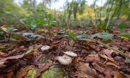Тела грибов образованы чем? особенности строения тела гриба