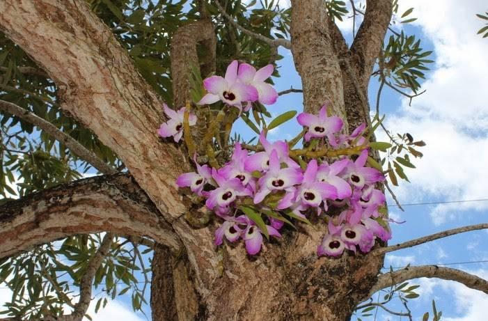 11 видов грунта для орхидей, включая эффект био. подробное описание и рекомендации по выбору