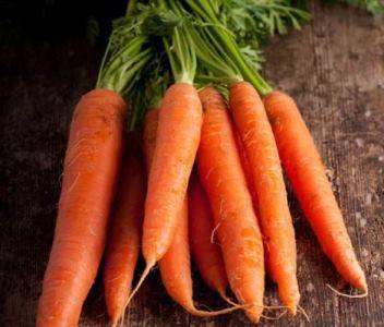 Сорта моркови для сибири