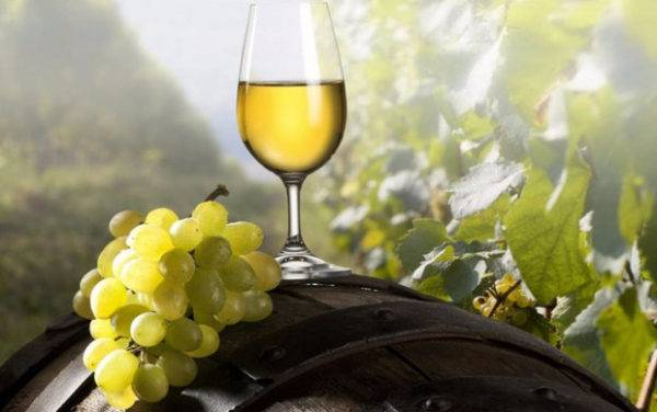 Шардоне — описание сорта винограда и особенности выращивания