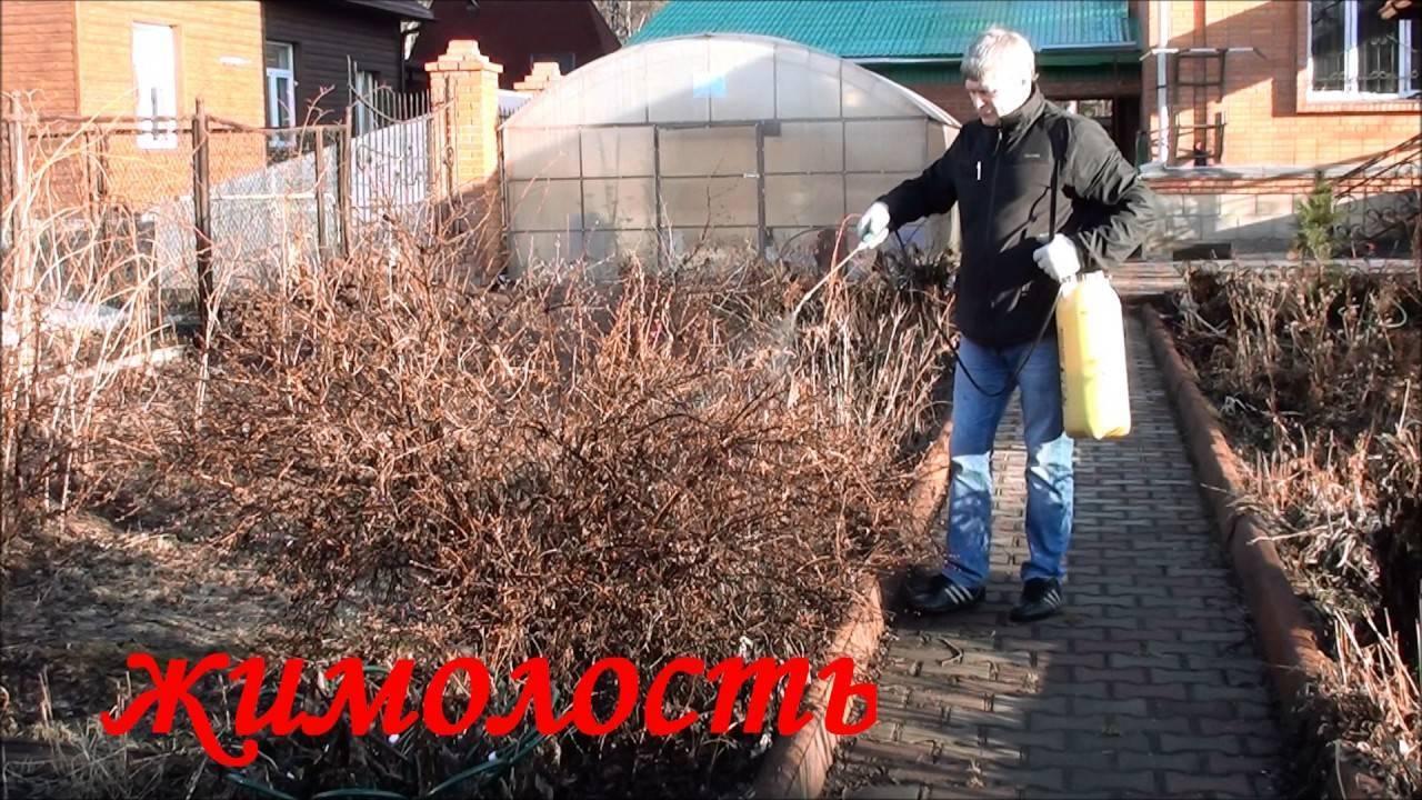 Применение препарата фармайод для растений на дачном участке