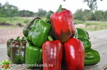 Обзор лучших сортов болгарского перца