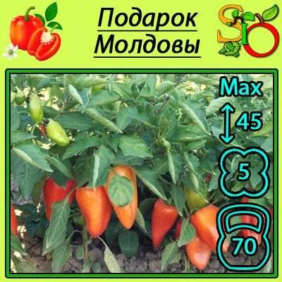 Сорта перца: биологические особенности, оптимальные сорта для теплиц и открытого грунта (105 фото)