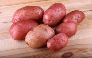 Топ-30 ранних сортов картофеля для вашего огорода