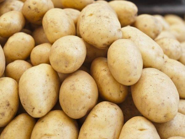 Гнили картофеля: фото, видео, почему гниёт картофель, меры защиты и борьбы