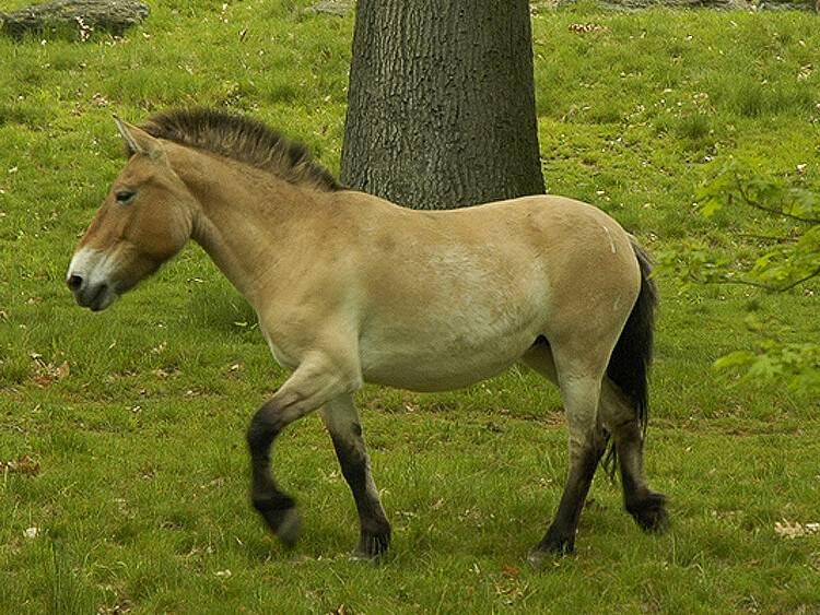 Породы лошадей с фото и описанием   продвижение сайтов в яндекс