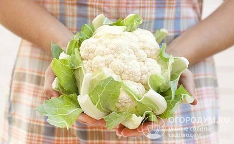 Как заморозить цветную капусту? рецепт с фотографиями