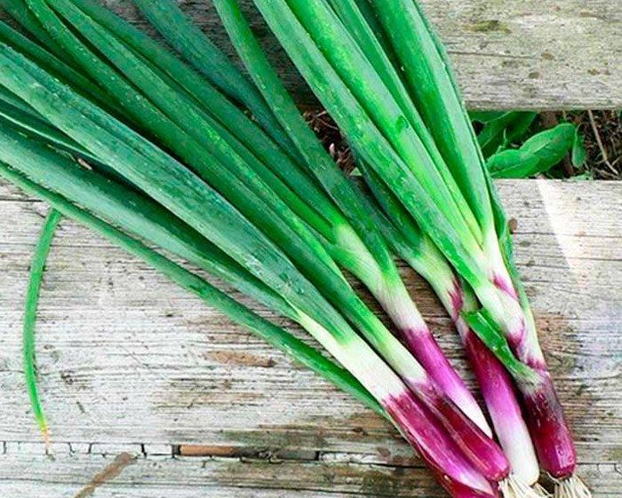 Батун-лук: посадка и уход в открытом грунте, секреты выращивания
