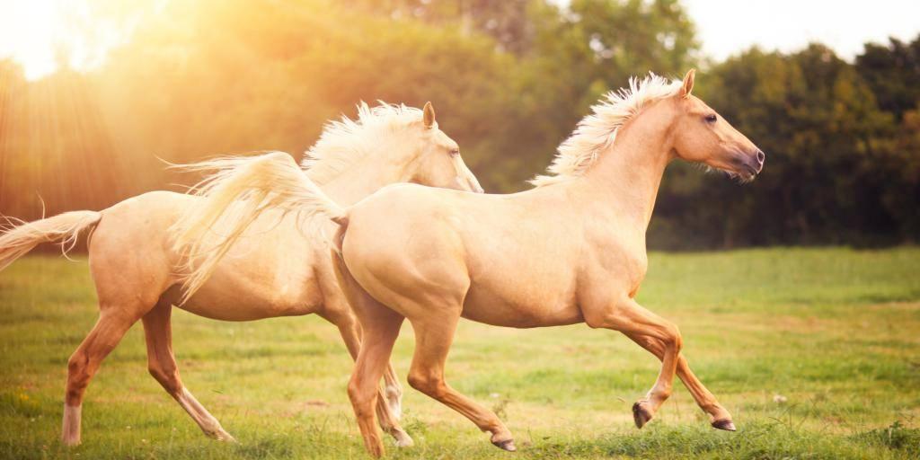 К чему снится лошадь во сне для женщины - сонник