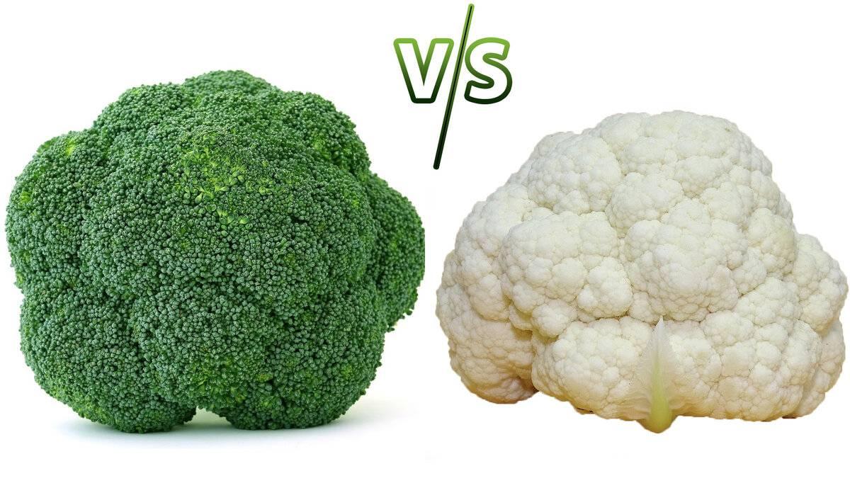 Брокколи и цветная капуста: чем отличаются, что полезнее, фото