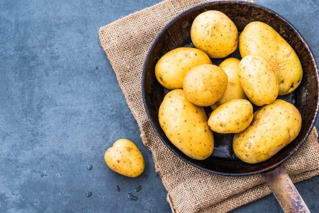 Уладар – сорт картофеля и его характеристики + видео
