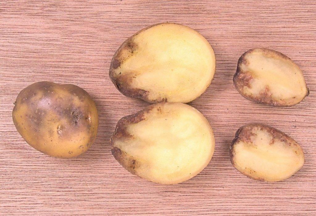 Картошка черная внутри причина — сад и огород