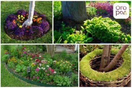 Приствольные круги плодовых деревьев: особенности ухода и варианты оформления