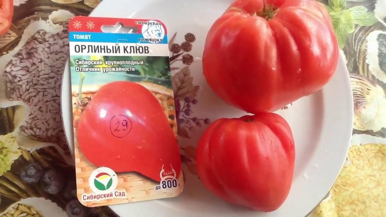 Нарядные плоды томата для салатов и засолки — описание и характеристики сорта помидор «орлиный клюв»