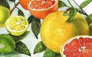 Что такое кумкват: где растёт и чем полезен для человека этот фрукт